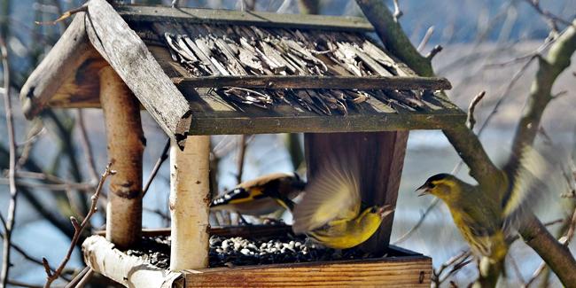 Comment fabriquer une mangeoire à oiseaux pour l'hiver ?